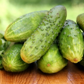 «Game» - Organic Cucumber Seeds