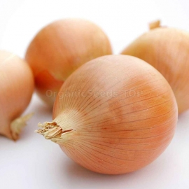 «Gold Princess» - Organic Onion Seeds