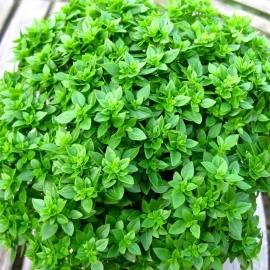 «Dwarf» - Organic Greek Basil Seeds