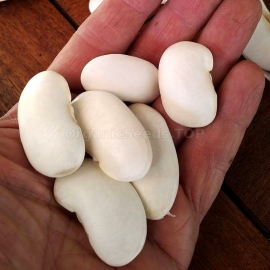 «Greek Elephants» - Organic Bean Seeds