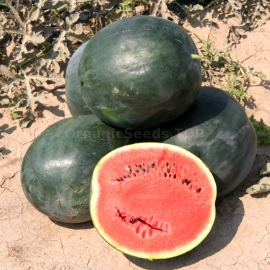 «Polar Lights» - Organic Watermelon Seeds