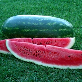 «Favourite» - Organic Watermelon Seeds