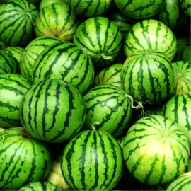 «Stellar» - Organic Watermelon Seeds