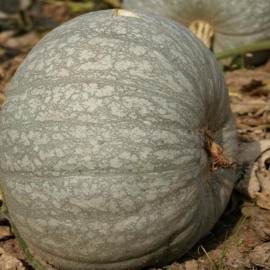 «Therapeutic» - Organic Pumpkin Seeds