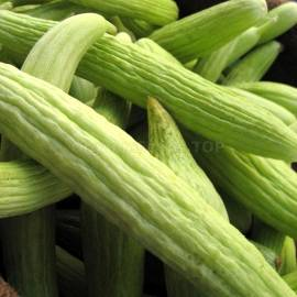«Armenian Cucumber» - Organic Melon Seeds
