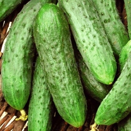 «Vodoley» - Organic Cucumber Seeds