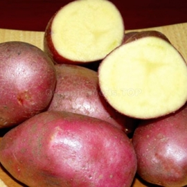 «Diva» - Organic Potato Seeds