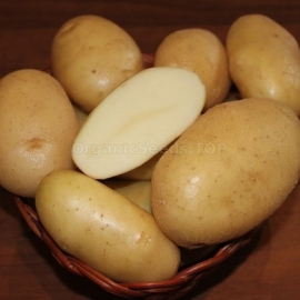 «Ilona» - Organic Potato Seeds