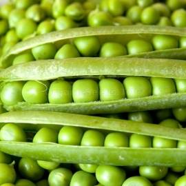 «Alderman» - Organic Pea Seeds
