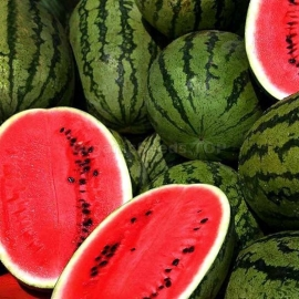 «Arsenal» - Organic Watermelon Seeds