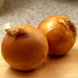 «Batyr» - Organic Onion Seeds