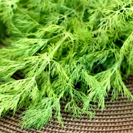 «Gribovsky» - Organic Dill Seeds
