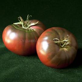 «Pierce's Pride» - Organic Tomato Seeds