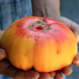Фото «Grandma Viney's Yellow and Pink» - Organic Tomato Seeds