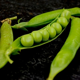 «Lincoln» - Organic Pea Seeds