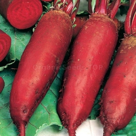 «Long Cylinders» - Organic Beetroot Seeds