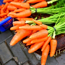 «Moscow Winter» - Organic Carrot Seeds