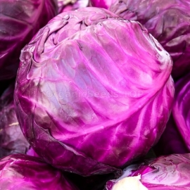 «Anthracite» - Organic Cabbage Seeds