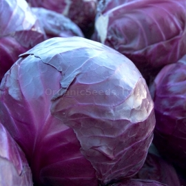 «Maxilla» - Organic Cabbage Seeds