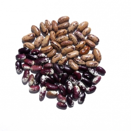 «Mix» - Organic Bean Seeds