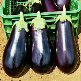 «Diamond» - Organic Eggplant Seeds