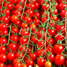 «Cherry Red» - Organic Tomato Seeds