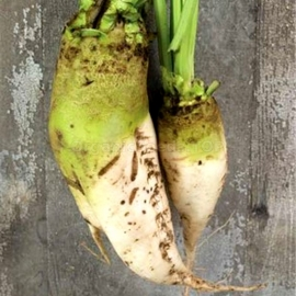 «Zentaur» - Organic Fodder Beetroot Seeds