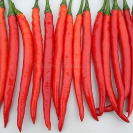 «Long Red Chili» - Organic Hot Pepper Seeds