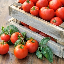 «Lord of the steppes» - Organic Tomato Seeds