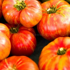 «Big Rainbow» - Organic Tomato Seeds