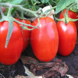 «Colombia» - Organic Tomato Seeds