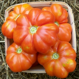«Shaker's Large Red» - Organic Tomato Seeds