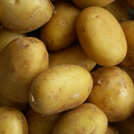 «Ballad» - Organic Potato Seeds