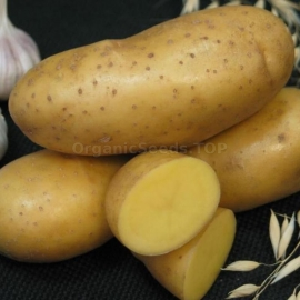 «The Empress» - Organic Potato Seeds