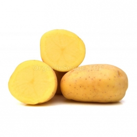 «Triumph» - Organic Potato Seeds