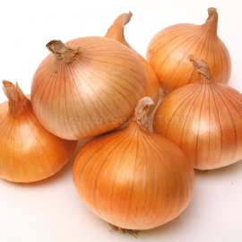 «Tkachevsky» - Organic Onion Seeds