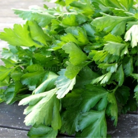 «Yielding» - Organic Parsley Seeds